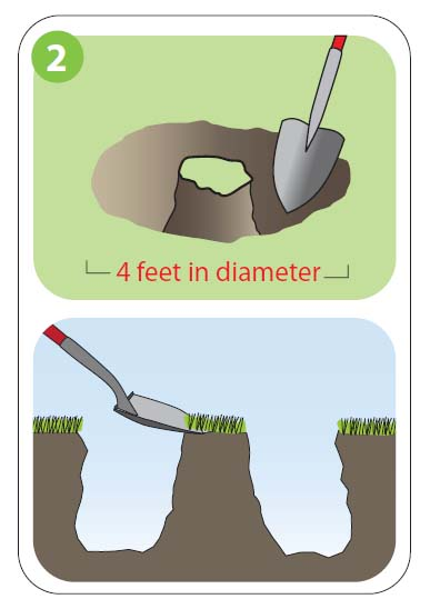 how to plant2