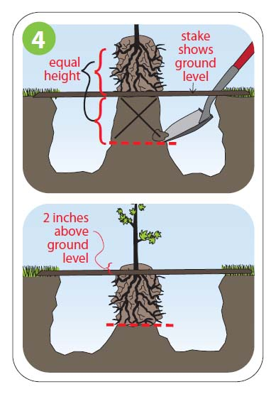 how to plant4