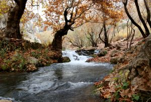 Stream with trees  in the fall